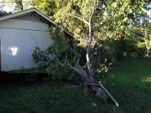 Predictions: We Got Trees, Trees Fallin'